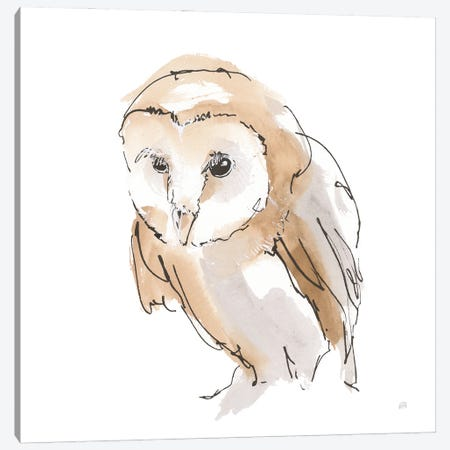 Barn Owl I Canvas Print #CPA227} by Chris Paschke Canvas Print