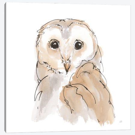 Barn Owl Ii Canvas Print #CPA228} by Chris Paschke Canvas Art
