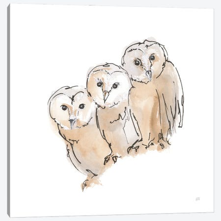 Barn Owl Iii Canvas Print #CPA229} by Chris Paschke Canvas Art