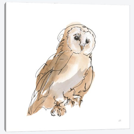 Barn Owl Iv Canvas Print #CPA230} by Chris Paschke Art Print