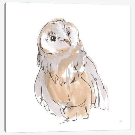 Barn Owl V Canvas Print #CPA231} by Chris Paschke Canvas Print