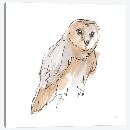 Barn Owl Vi Canvas Print #CPA232} by Chris Paschke Canvas Art Print