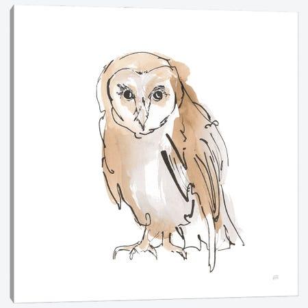 Barn Owl Vii Canvas Print #CPA233} by Chris Paschke Canvas Art Print