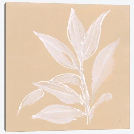Leaf Study I Canvas Print #CPA251} by Chris Paschke Canvas Print