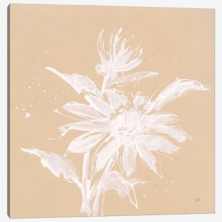 Echinacea II Canvas Print #CPA286} by Chris Paschke Canvas Art Print