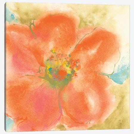Coral Poppy II Canvas Print #CPA43} by Chris Paschke Canvas Art Print