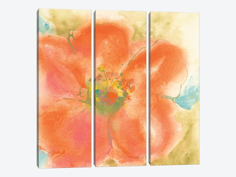 Coral Poppy II by Chris Paschke 3-piece Canvas Art Print