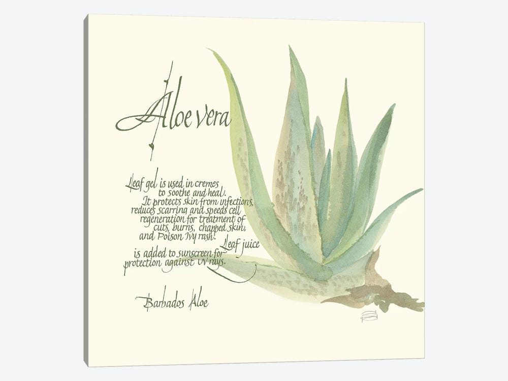 Aloe Vera by Chris Paschke 1-piece Art Print