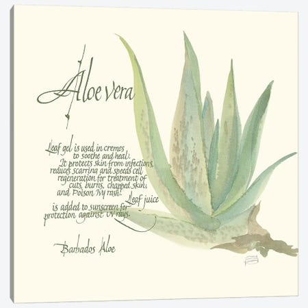 Aloe Vera 3-Piece Canvas #CPA90} by Chris Paschke Canvas Artwork
