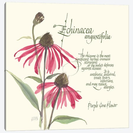 Echinacea 3-Piece Canvas #CPA91} by Chris Paschke Canvas Art