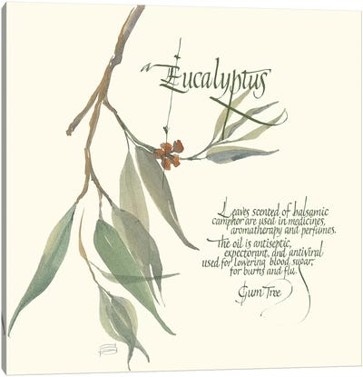 Eucalyptus Canvas Art Print