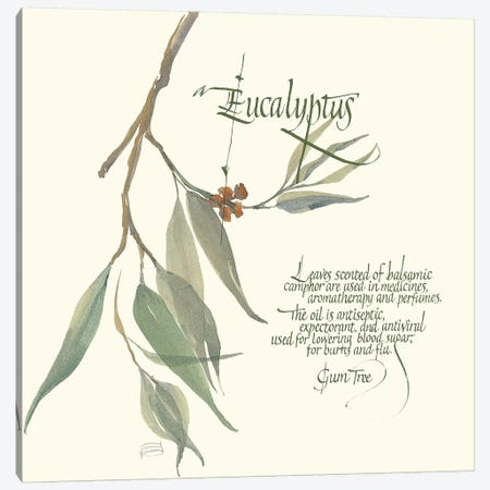Eucalyptus Canvas Print #CPA92} by Chris Paschke Canvas Wall Art