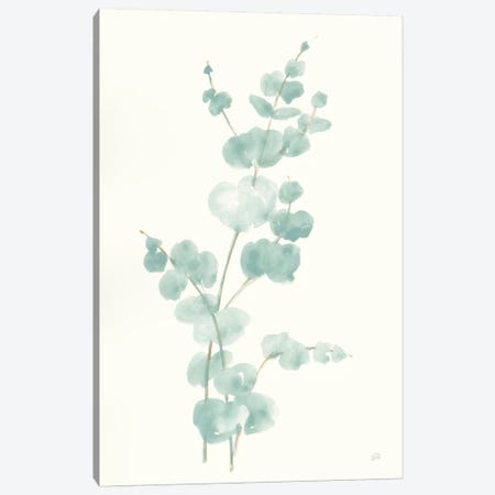 Eucalyptus Branch II Canvas Print #CPA94} by Chris Paschke Canvas Art Print
