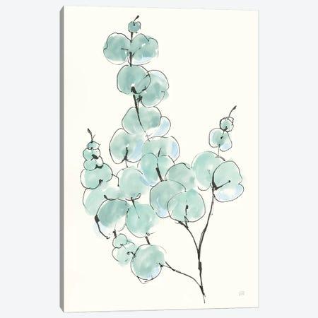 Eucalyptus Branch III Canvas Print #CPA95} by Chris Paschke Canvas Art Print