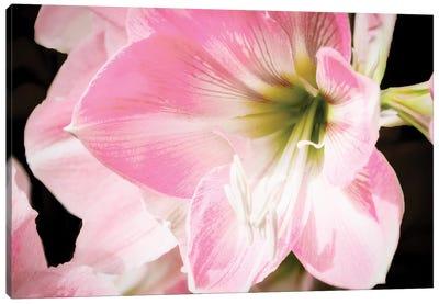 Soft Petals Canvas Art Print