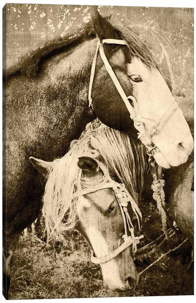 Vintage Horses Canvas Art Print