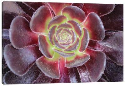 Bright Succulent Canvas Art Print