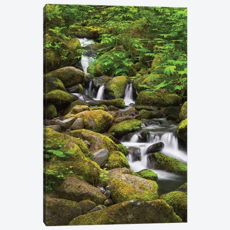 USA, Oregon, Hood River. A waterfall on Tish Creek. Canvas Print #CRD2} by Christopher Reed Canvas Print