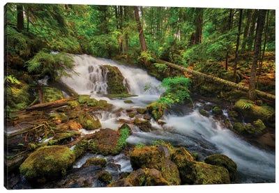 USA, Oregon, Prospect. Pearsony Falls near the Prospect State Scenic Viewpoint. Canvas Art Print