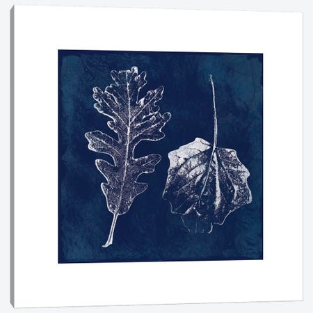 Cyanotype Oak Leaves Canvas Print #CRO102} by Carol Robinson Canvas Artwork