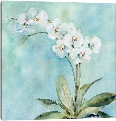 Sunlit Orchid Canvas Art Print