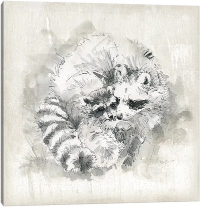 Raccoon Momma And Baby Canvas Art Print
