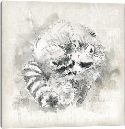 Raccoon Momma And Baby Canvas Art Print