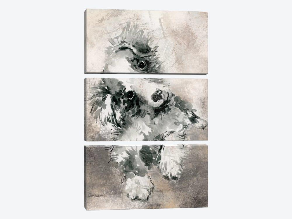 Collie by Carol Robinson 3-piece Canvas Artwork