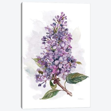 Awash in Lilac I Canvas Print #CRO1164} by Carol Robinson Canvas Wall Art