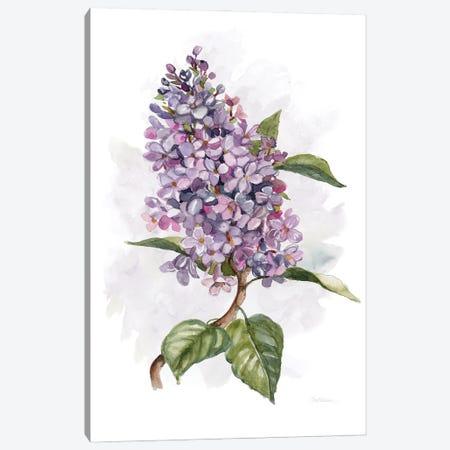 Awash in Lilac II Canvas Print #CRO1165} by Carol Robinson Canvas Art