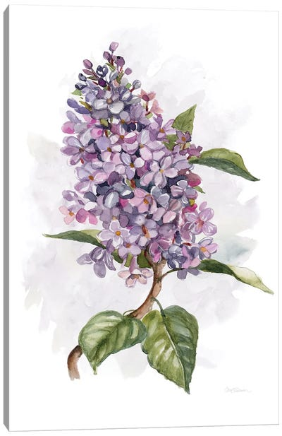Awash in Lilac II Canvas Art Print
