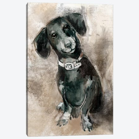Dachshund Canvas Print #CRO116} by Carol Robinson Canvas Wall Art