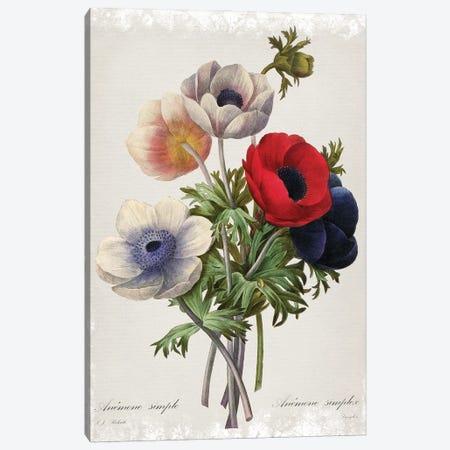 Botanical Bouquet Anemone Canvas Print #CRO1177} by Carol Robinson Canvas Art Print