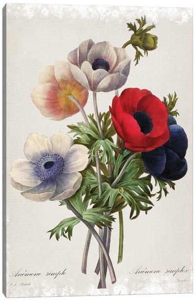 Botanical Bouquet Anemone Canvas Art Print