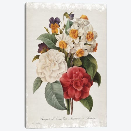 Botanical Bouquet Camelias Canvas Print #CRO1178} by Carol Robinson Canvas Art