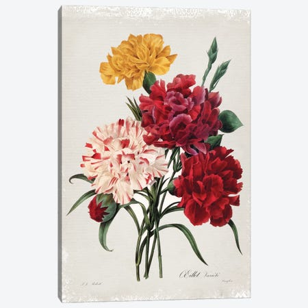 Botanical Bouquet Carnations 3-Piece Canvas #CRO1179} by Carol Robinson Canvas Artwork