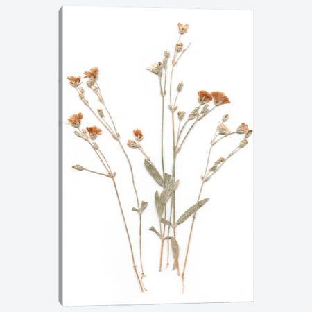 Pressed Botanical I Canvas Print #CRO1200} by Carol Robinson Canvas Wall Art