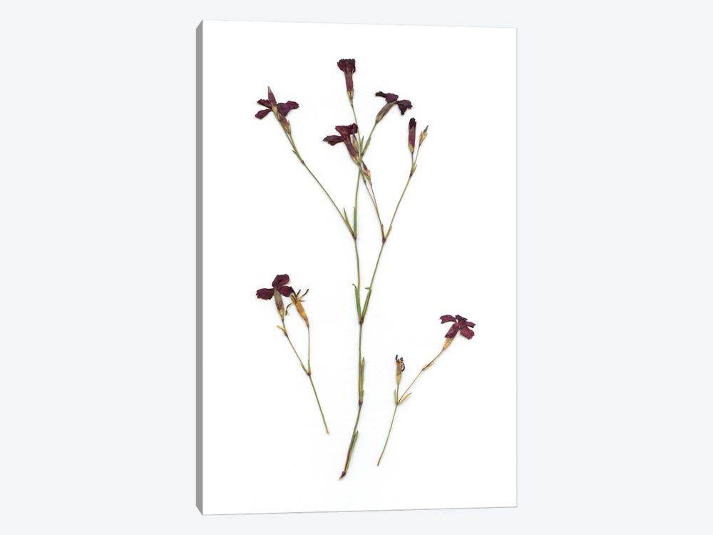 Pressed Botanical II by Carol Robinson 1-piece Art Print