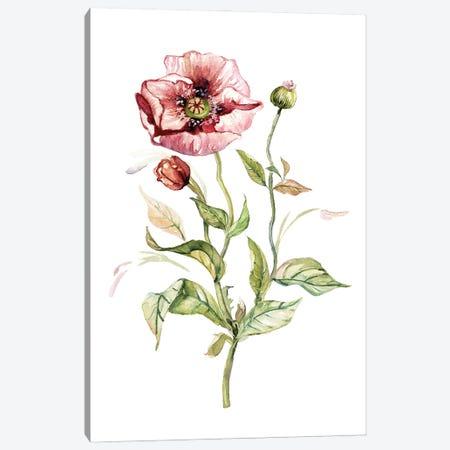 Wild Poppy Canvas Print #CRO1214} by Carol Robinson Canvas Art