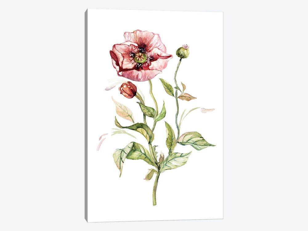 Wild Poppy by Carol Robinson 1-piece Canvas Art Print