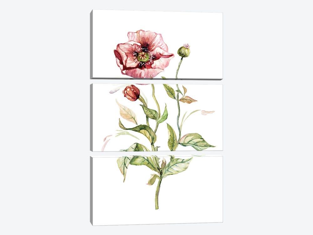 Wild Poppy by Carol Robinson 3-piece Canvas Print