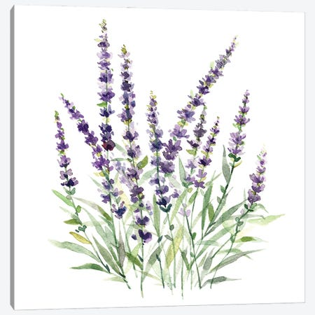 Lavender Botanical I Canvas Print #CRO1271} by Carol Robinson Canvas Art Print