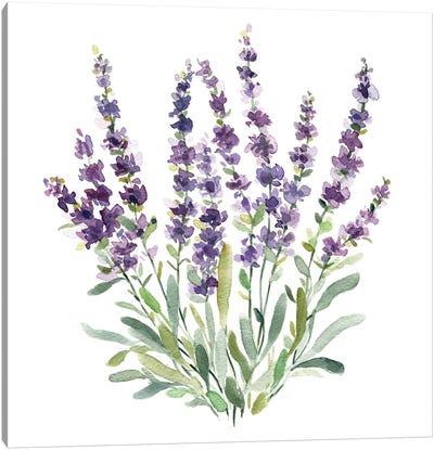 Lavender Botanical II Canvas Art Print