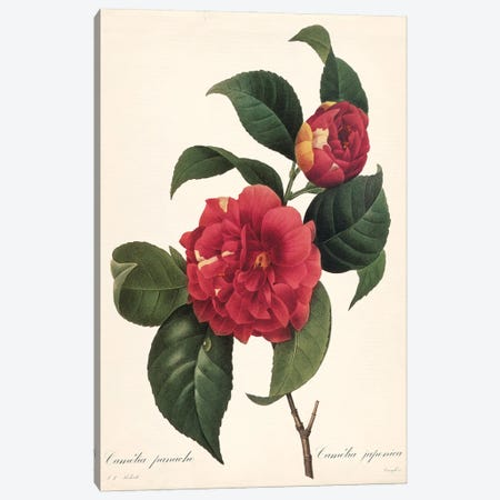 Red Botanical I Canvas Print #CRO1284} by Carol Robinson Canvas Print