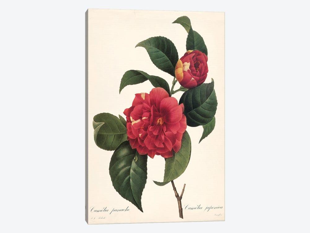 Red Botanical I by Carol Robinson 1-piece Canvas Artwork