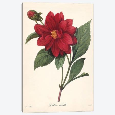 Red Botanical II Canvas Print #CRO1285} by Carol Robinson Canvas Print