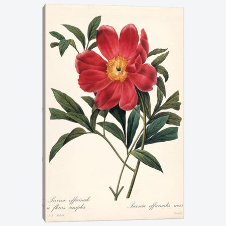 Red Botanical IV Canvas Print #CRO1287} by Carol Robinson Canvas Print