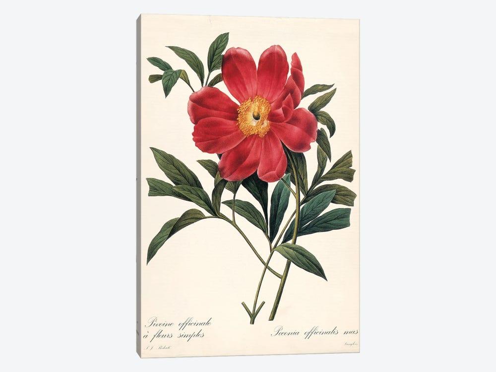Red Botanical IV by Carol Robinson 1-piece Canvas Print