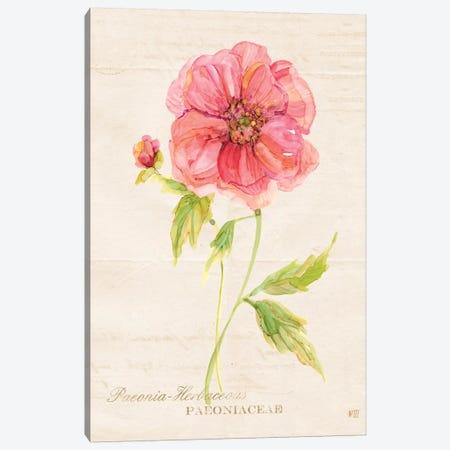 Botanical Peony Canvas Print #CRO129} by Carol Robinson Canvas Artwork