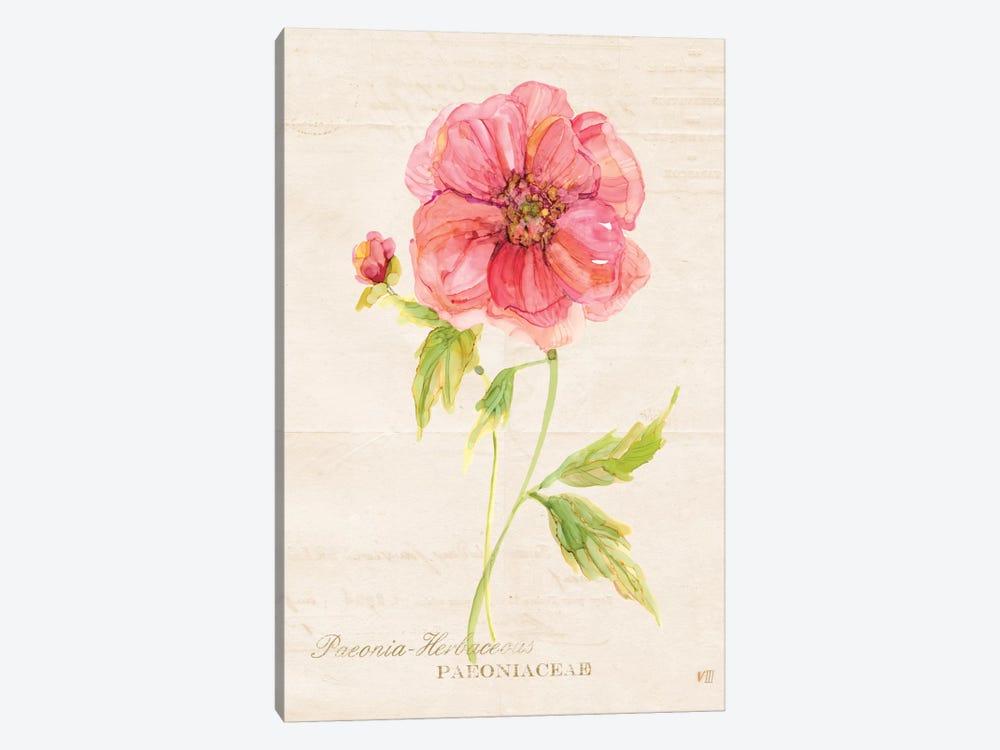Botanical Peony by Carol Robinson 1-piece Canvas Art Print